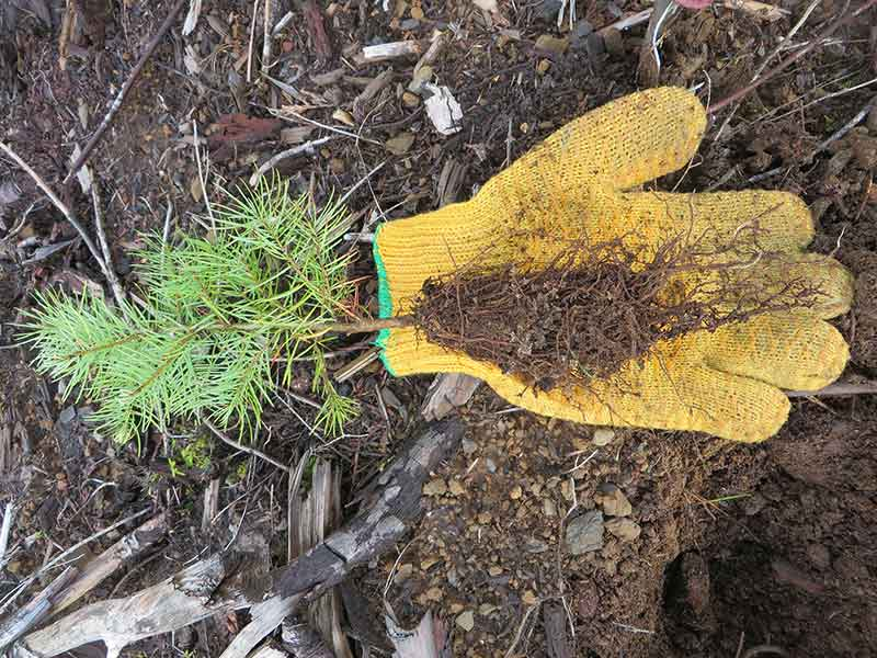 Glove with seedling