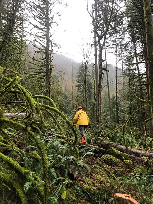 Trail Clearing crew